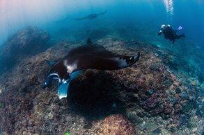 Scuba Diving Daytrip in Nusa Penida Bali Manta point