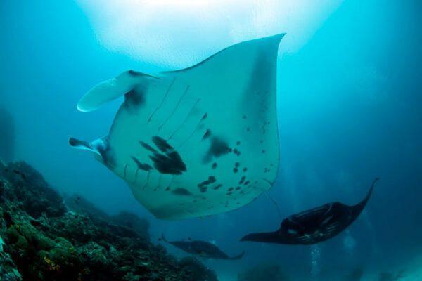 daytrip diving
