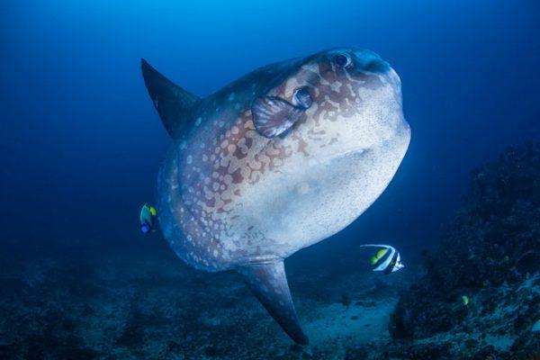 Crystal Bay Mola Mola bali Nusa Penida