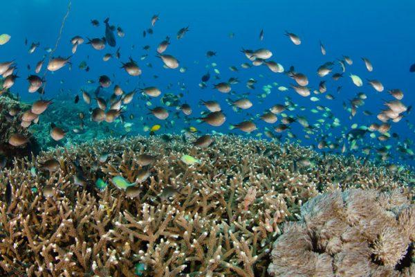 Bali Dive Site Nusa Penida